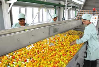Apricot Plum Peach Beverage Processing Line