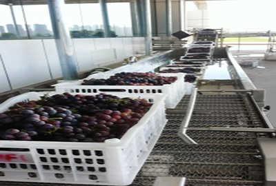 Grape Beverage Processing Line