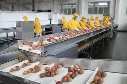 Passion fruit Guava Beverage Processing Line